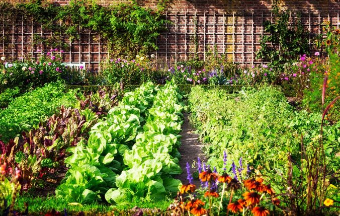 beautifulveggiegarden-1000