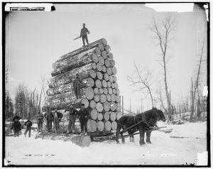 logging-a-big-load